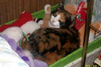 Miss Coco Cherie - Love the toy box.  Yes, I will share the toys later.