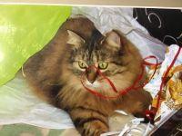 Remembering Jasmine my son's cat