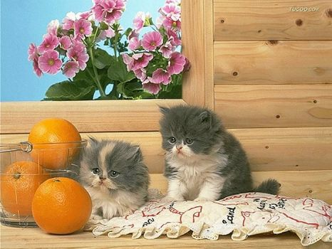 kittens and oranges