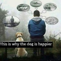 This is why a dog is happier