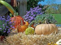 Pumpkins by David Wagner