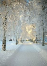 Winter Peaceful Scene