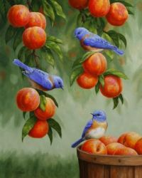 Birds and yummy fruit trees