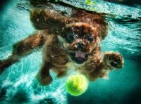 Underwater Dog - photo by Seth Casteel