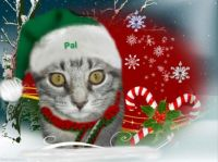 Pal is waiting for Santa Claws