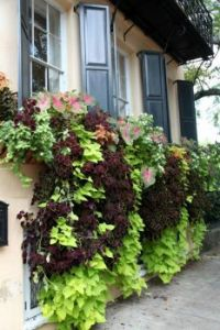 Hidden Window Boxes