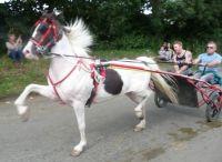 P1040181 (2)horse at Appleby fair