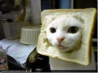 Inbred cat