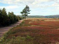Blueberry field, Economy Falls, Nova Scotia