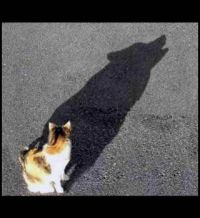 a simple cat on the outside, but the heart, and shadow, of a wolf