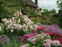 Flowers at Sissinghurst Castle