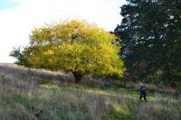 Hiking in autumn
