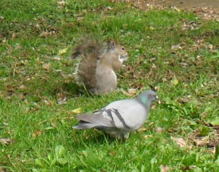 Theme-Birds-Think ones a squirrel