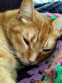 Wally pretending to sleep!