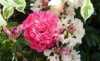 From my garden.