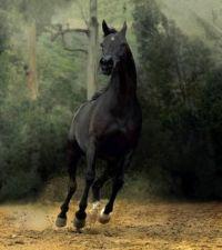 beautiful-horses-