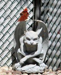Cardinal visiting our Gargoyle