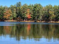 A Lake and Trees.