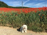 Kate and poppies