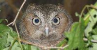 Owllie McOwlface