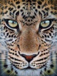 close-up eyes