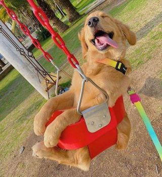 A happy pup