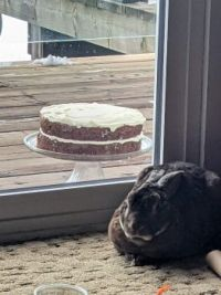 No room in the freezer for Carrot Cake