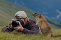 2 ~ 'Take a Picture not a Trophy' (Groundhog)