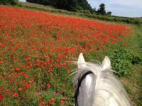 Finn Valley Poppies 2
