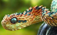 1  ~  'Dragon Snake.'