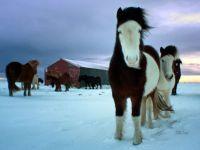Herd of Ponies