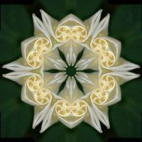 Flower Twirl 6