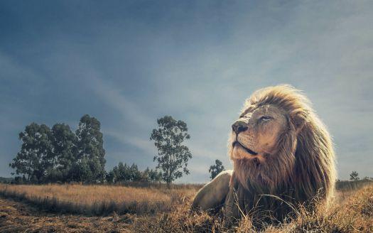 Őfelsége