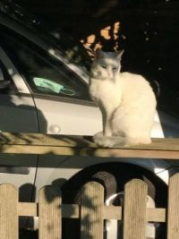 The cat of my neighbours