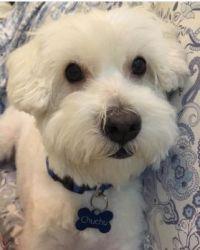 Chuchu - my dog
