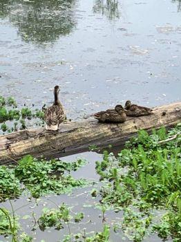 At Delta Pond