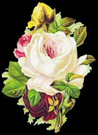 Themes Vintage illustrations/pictures - Beautiful pink and red rose bouquet