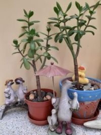 Indoor plants and ornaments