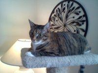 Hampton, on the kitty condo perch