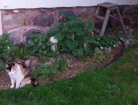 Beauty in the side garden.