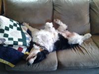 It's a Dog's Life!