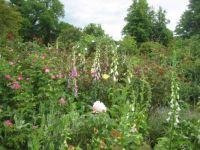 Basildon Park garden