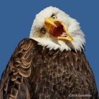 crazy eagle