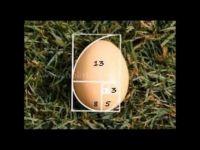 Fibonacci Sequence in Nature 1 of 4
