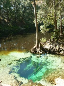 Pott Springs in the Withlacoochee River, north Florida