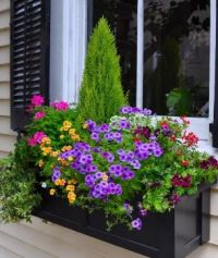 Fabulous Colourful Window Box.