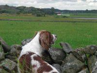 Astor checking birds
