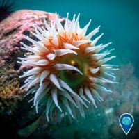 Keep your friends close and your anemones closer!