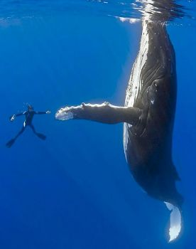 Greeting a giant