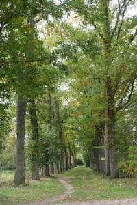 Nice trail in the woods near Winterswijk, between beeches......